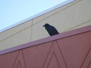 raven at stop 1NM
